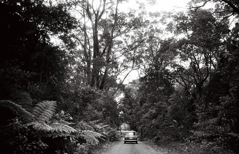 springbrook-film-mini-tamborine-gold-coast-tweed-photographer027