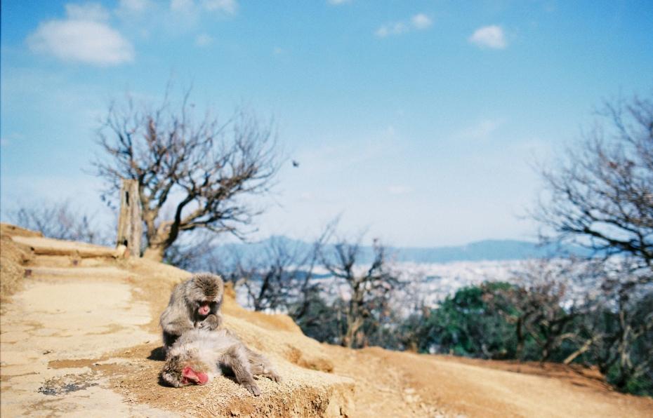 003-kyoto-arashiyama-sophie-baker-photography