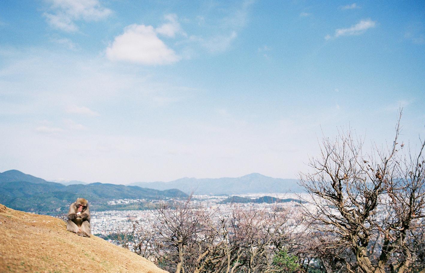 004-kyoto-arashiyama-sophie-baker-photography