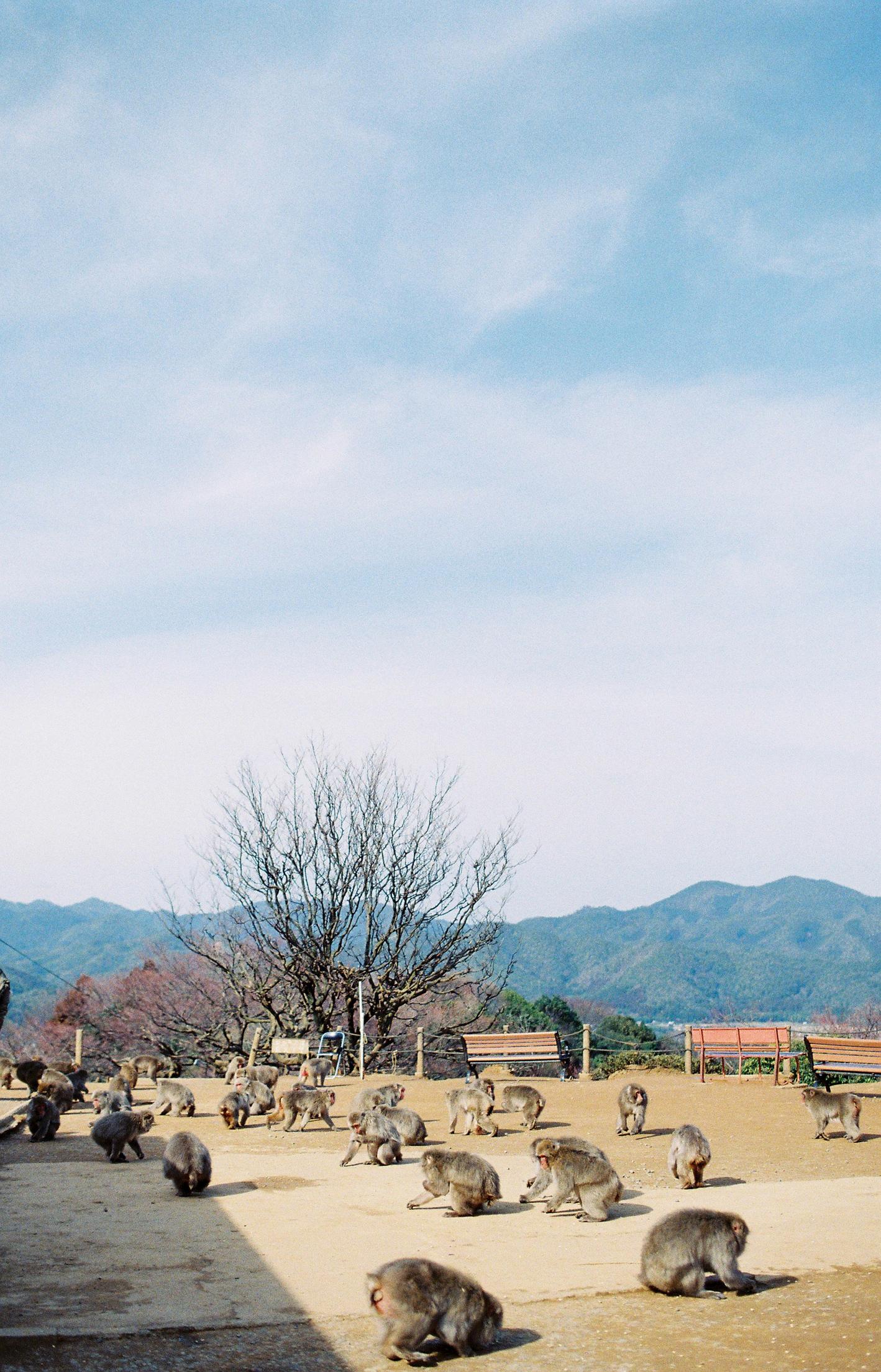 005-kyoto-arashiyama-sophie-baker-photography