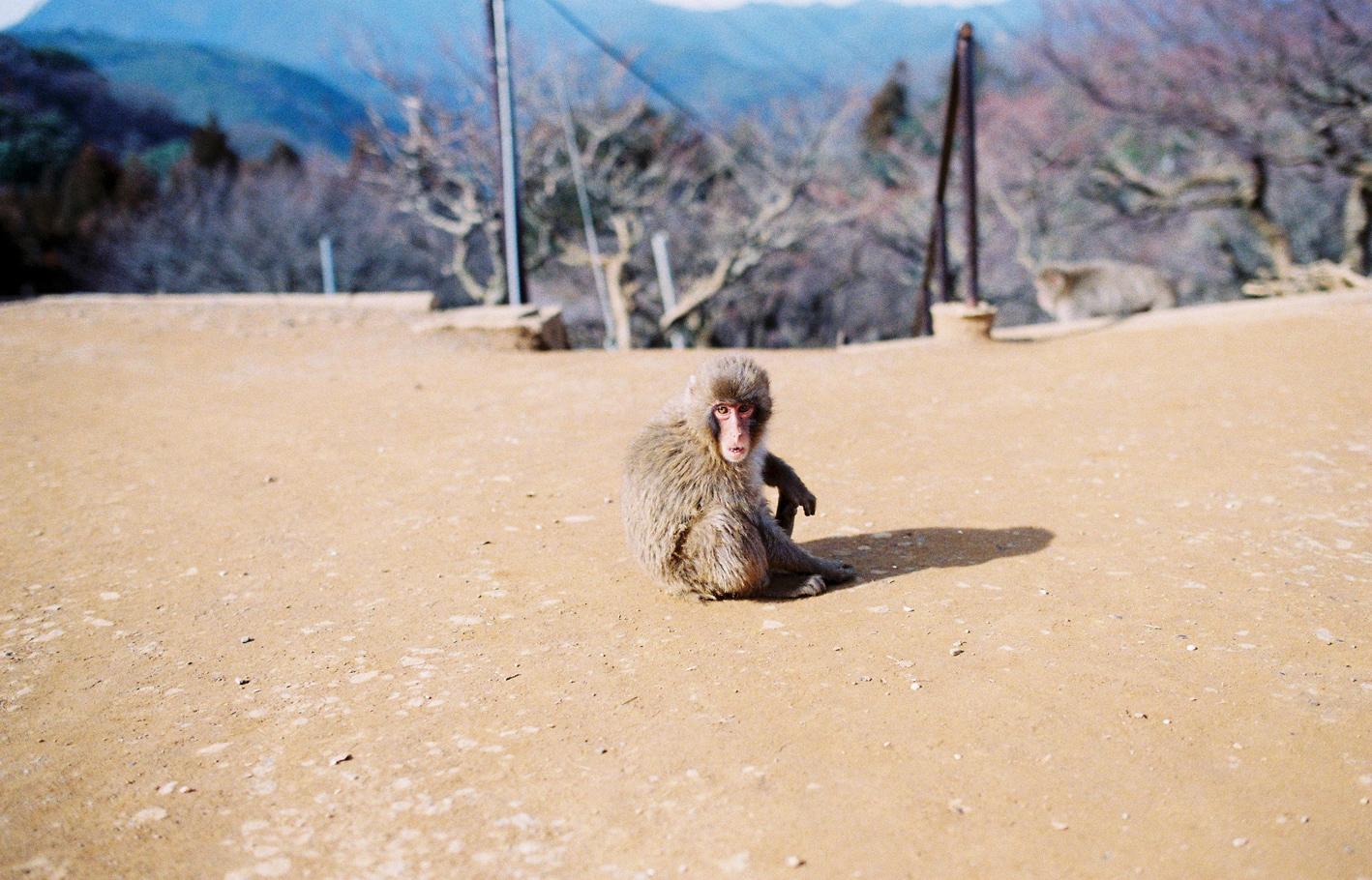007-kyoto-arashiyama-sophie-baker-photography