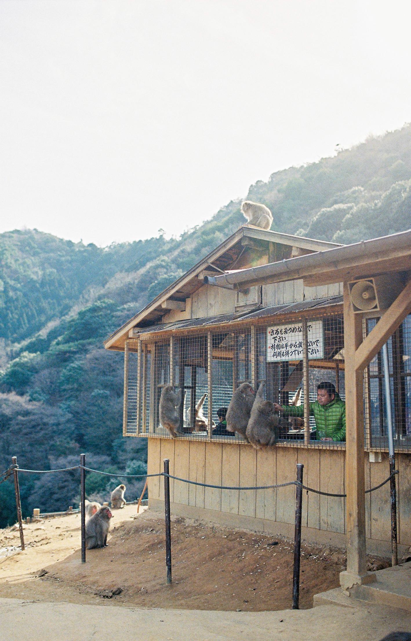 010-kyoto-arashiyama-sophie-baker-photography